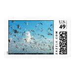 seagulls in sky over inlet birds stamp