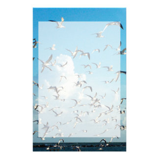 seagulls in sky over inlet birds stationery