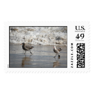 Seagulls, large stamps