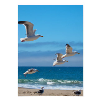Seagulls mf posters