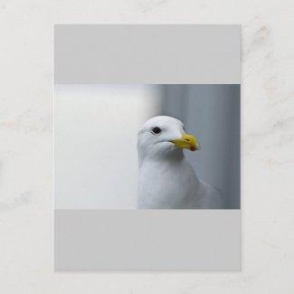 Seagulls Need Love Too