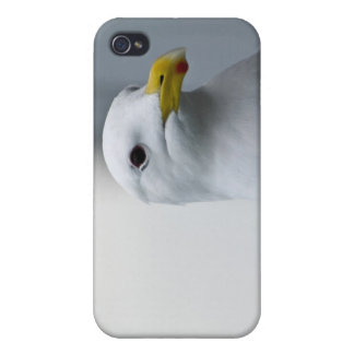 Seagulls Need Love Too Covers For iPhone 4