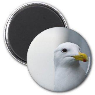 Seagulls Need Love Too Fridge Magnets