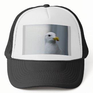 Seagulls Need Love Too Hats