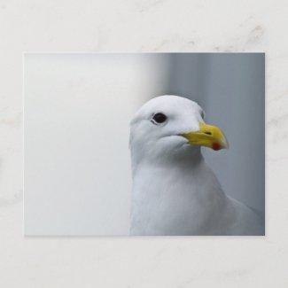 Seagulls Need Love Too Postcards