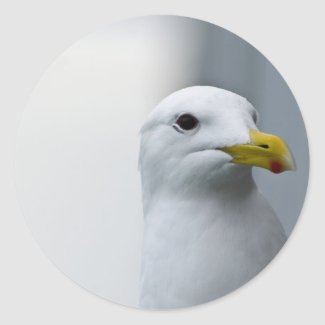 Seagulls Need Love Too Stickers