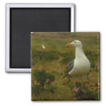 Seagulls on Anacapa Island (Channel Islands) 2 Inch Square Magnet