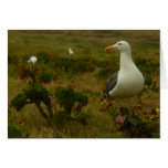 Seagulls on Anacapa Island (Channel Islands) Card