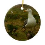 Seagulls on Anacapa Island (Channel Islands) Ceramic Ornament