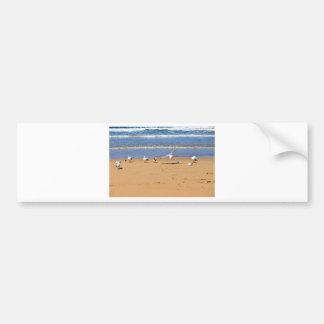 SEAGULLS ON BEACH QUEENSLAND AUSTRALIA CAR BUMPER STICKER