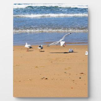 SEAGULLS ON BEACH QUEENSLAND AUSTRALIA PLAQUE