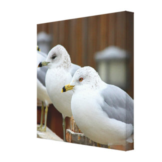 Seagulls on Lake Dock: Telephoto Zoom Stretched Canvas Print