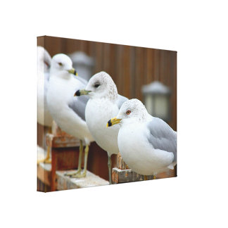 Seagulls on Lake Dock: Telephoto Zoom Stretched Canvas Prints