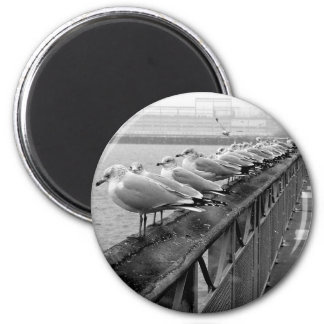 Seagulls on Railing 2 Inch Round Magnet