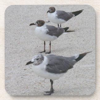 Seagulls on the Beach Coaster