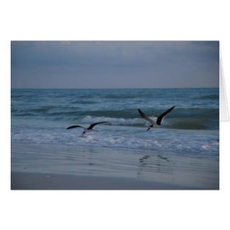 Seagulls on the Beach, Marco Island, Florida, 2010 Card