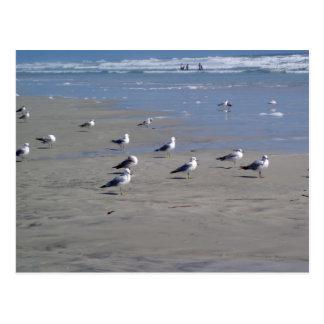 SEAGULLS ON THE BEACH POSTCARDS