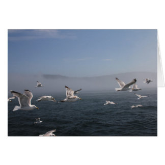 Seagulls over the Bay of Fundy, Grand Manan, NB Card