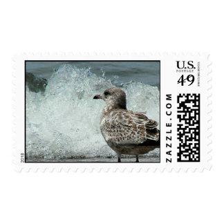 Seagull's Paradise Postage