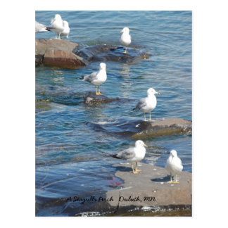Seagulls Perch, A Seagulls Perch   Duluth, MN Postcard