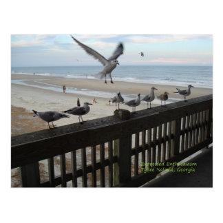 Seagulls Post Card