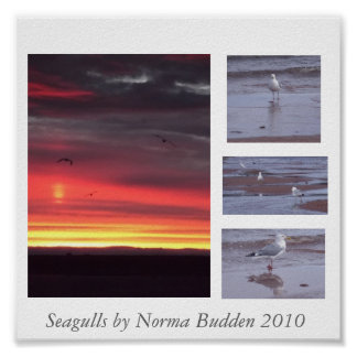 Seagulls poster by Norma Budden