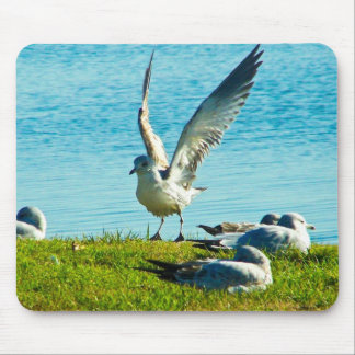 Seagull's Protest Mouse Pad
