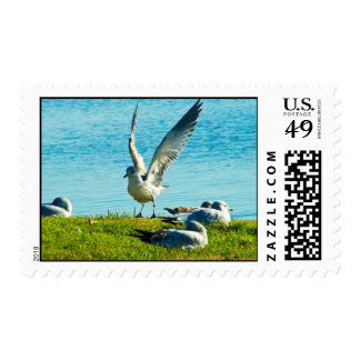 Seagull's Protest Postage