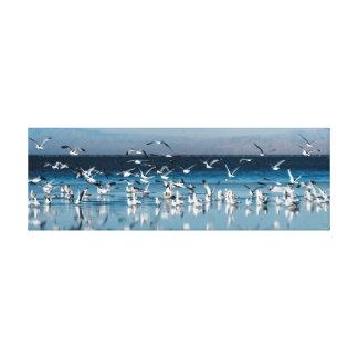 seagulls reflections canvas print