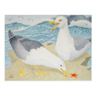 Seagulls resting on a cliff postcard