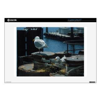 """Seagulls 15"""" Laptop Decal"""