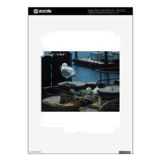 Seagulls iPad 3 Decals