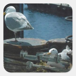 Seagulls Square Sticker