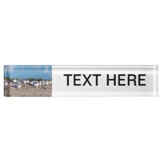Seagulls standing on beach eye level nameplate