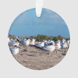 Seagulls standing on beach eye level ornament