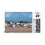 Seagulls standing on beach eye level postage stamp
