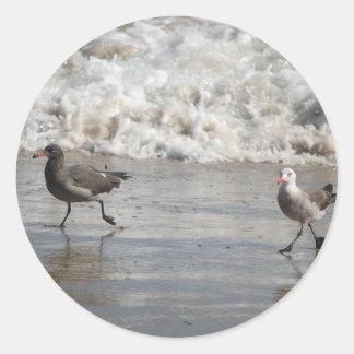 Seagulls, stickers