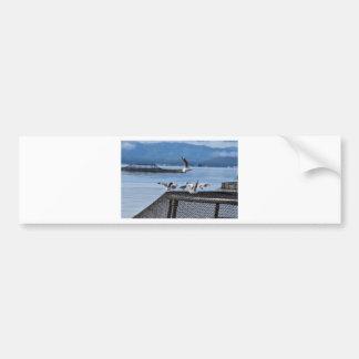SEAGULLS STRAHAN TASMANIA CAR BUMPER STICKER