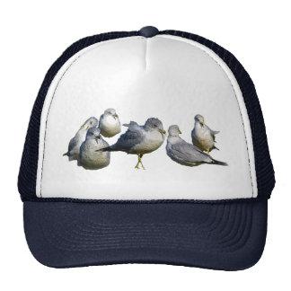 Seagulls Trucker Hat