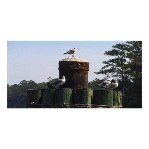 Seagulls - We Flock Together Card