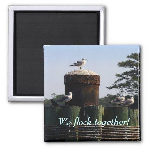 Seagulls - We Flock Together Fridge Magnets