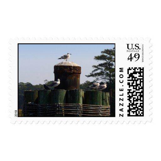 Seagulls - We Flock Together Postage Stamp