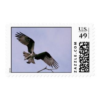 Seahawk Aflight Postage Stamp