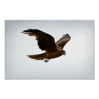Seahawk Impresiones