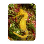 Seahorse amarillo del longsnout imanes rectangulares