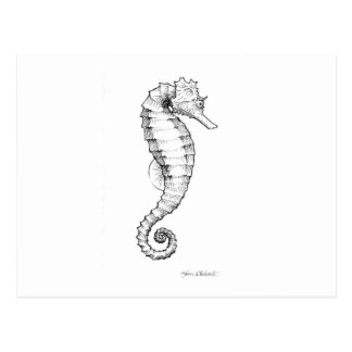 Seahorse Black and White Drawing Postcard