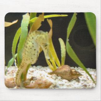 Seahorse de ocsilación - mousepad