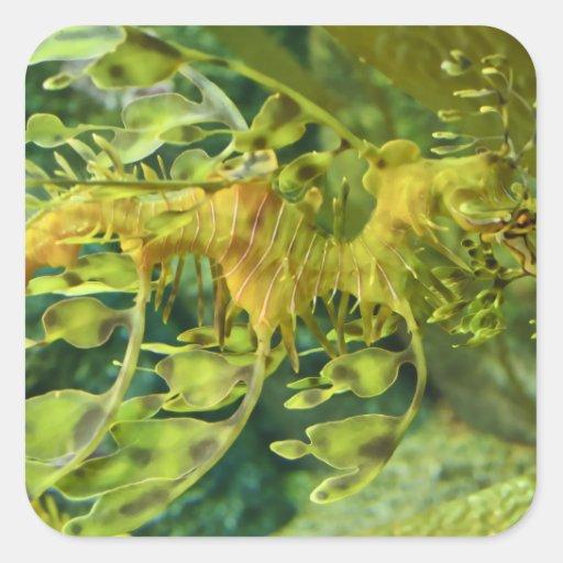 Seahorse del dragón pegatina cuadrada