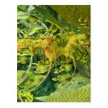 Seahorse del dragón tarjetas postales