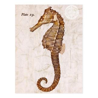 Seahorse del vintage - Seahorses antiguos modifica Tarjeta Postal